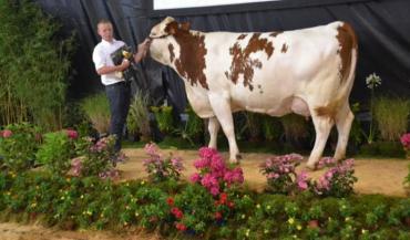 Esméralda, au Gaec de la randouillère (Houssay (53) remporte le prix de championnat adulte.