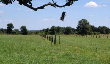 S'engager en agroforesterie est un pari sur l'avenir, mais déjà au bout de quelques années, les évolutions se font sentir (photo d'archives).