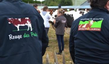 Le Cima reste la vitrine de l'élevage mayennais. Cette année, ce sont les Montbéliards qui vont se mettre en avant.