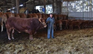 Michaël Martineau avec Edelweiss. Ce taureau sans corne hétérozygote a fait son temps dans l'élevage. Il sera à vendre.