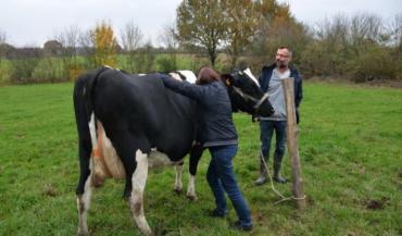 Le GabbAnjou organise des formations shiatsu en élevage avec Isabelle Dorso. Ici, le groupe est reçu chez Marina et Antony Bureau, éleveurs laitiers bio à Saint-Lézin (Maine-et-Loire).