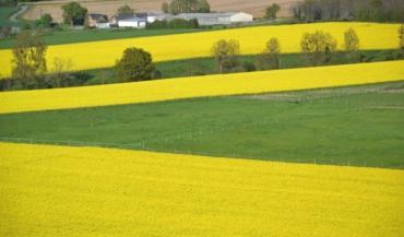 La surprime aux 52 premiers hectares sera forfaitaire, pour chaque exploitant. Il pourrait atteindre 99€/ha en 2018.