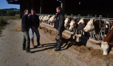 Georges et Jérémy Souty dans leur élevage, avec Simon Bosché (à gauche). Ce petit-cousin aide à tous les concours, et espère s'installer prochainement... avec des Montbéliardes.