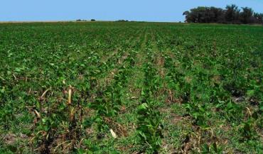 La France importe 50% de ses besoins en protéines végétales. Ici, des parcelles en Argentine.