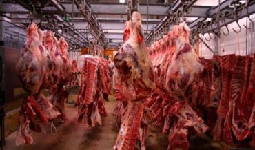 En 2012, Elivia a réalisé un chiffre d'affaires de 892millions d'euros et a commercialisé 140000 tonnes de viandes. Les chiffres pour 2013 seront présentés le 10avril, au siège de la coopérative à Ancenis. (photo archives)