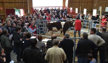 Les ventes au Domaine des Rues sont toujours très suivies par les éleveurs.