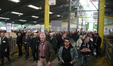 """La quasi-totalité des 296 bovins présentés a trouvé preneur au concours de Cholet, à des prix """"corrects""""."""