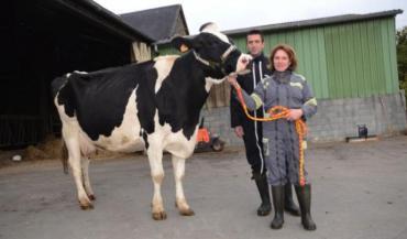 Magali Le Cam et Tanguy Fouassier avec Hollywood. La vache en 4e lactation a déjà participé deux fois au concours départemental, toujours classée en milieu de tableau. Cette fois-ci sera-t-elle la bonne?