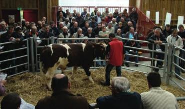 Dix-huit reproducteurs ont été vendus à une moyenne avoisinant les 2900 euros (photo Sica Domaine Rouge des Prés)