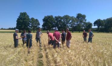Le groupe grandes cultures bio Mayenne-Sarthe Dephy Civam Bio 53 travaille sur l'agriculture bio de conservation.