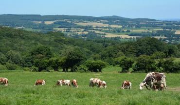 En France, les installations sont moins nombreuses que dans les évaluations de la profession. En Pays de la Loire, la collecte a freiné après le pic de sortie des quotas. Un éleveur sur deux à plus de cinquante ans.